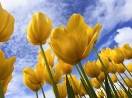blooms-bloom-gardening